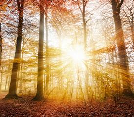 HART Holistic support light trees rays sun